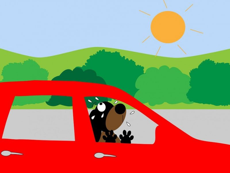 Shopper left dog howling locked in a 75F hot car!