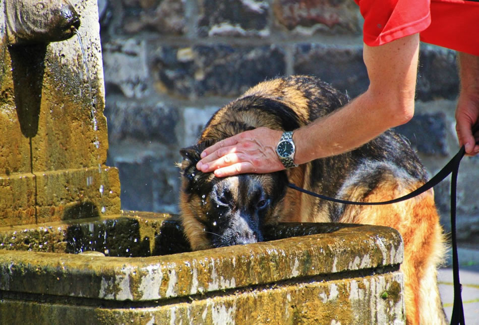 Dog Dangers In This Summer Heatwave You Need To Be Aware Of!